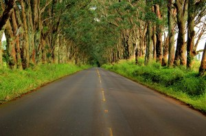 Tunnel of Trees around Mile 6 of the Kauai Marathon